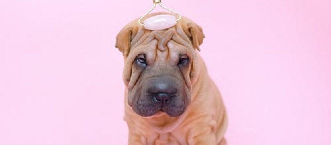 EQ-Puppy